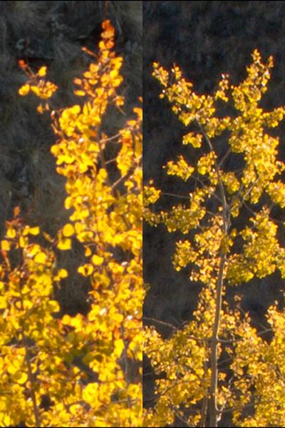 7d-G9-Leaves