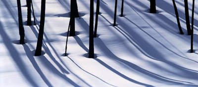 Burnt Trees and Shadows on Snow
